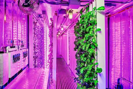 Contenedores Transformados En Granjas Sustentables